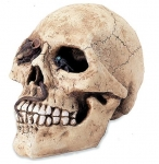 Crâne tête de mort  avec  Insectes et Souris