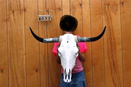 Crane De Bison A Vendre têtes et cornes de vache ou bison