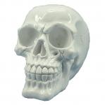 Crâne tête de mort blanc compact